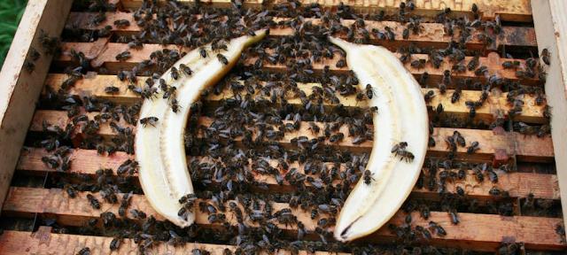 Έσπασε τα κοντέρ το άρθρο:Βουίζει η Ευρώπη - Μπανάνα...