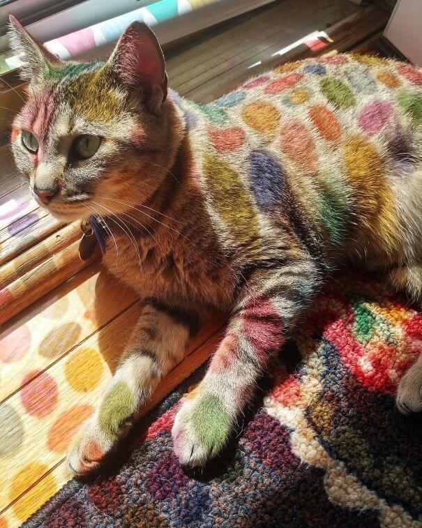20 Pictures Prove That 'Accidental' Art Can Be Astonishing - In Cute Cat News, My Mom Put Up An Easter Decal On Our Front Door And It Makes Gigi Look Like A Dr. Seuss Character