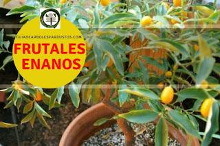 Arboles frutales enanos para el bosque de alimentos