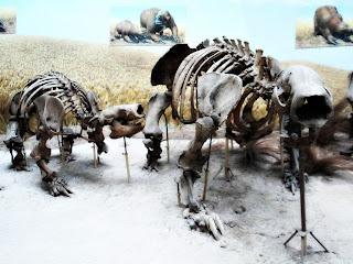 Megatério no Museo de La Plata, Argentina