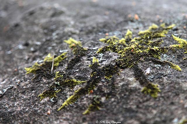 Flocon de mousse, Fontainebleau, (C) 2016 Greg Clouzeau