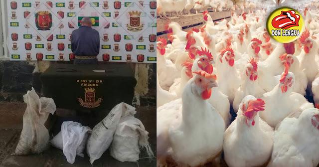 PELIGROSO : GNB Capturó a un anciano por haberse robado 31 gallinas ponedoras en Paraguaná