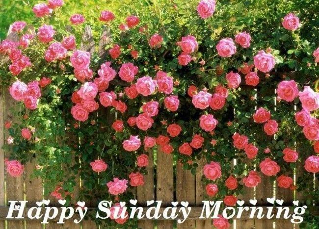 Holi Diwali Status: Happy Sunday New Latest HD Wallpaper