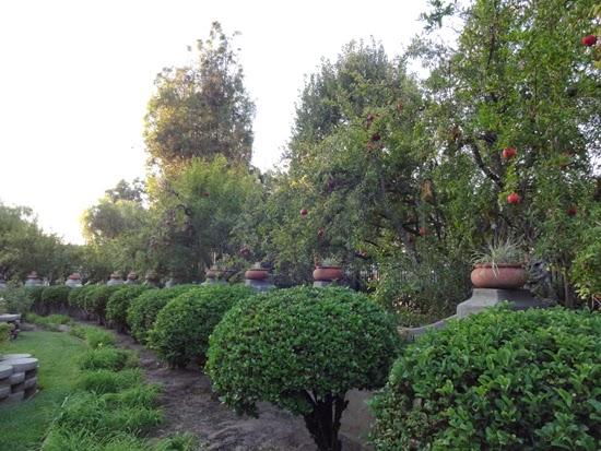 Workman Temple Museum garden