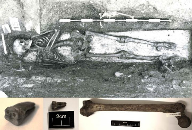 Eight hundred year old Norwegian skeleton found to have traces of Salmonella