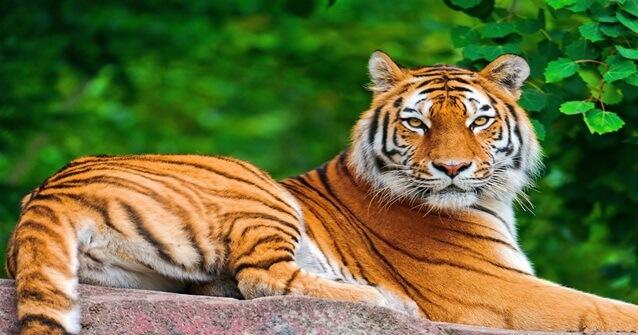 8 animais que foram extintos por culpa do homem teclandoo