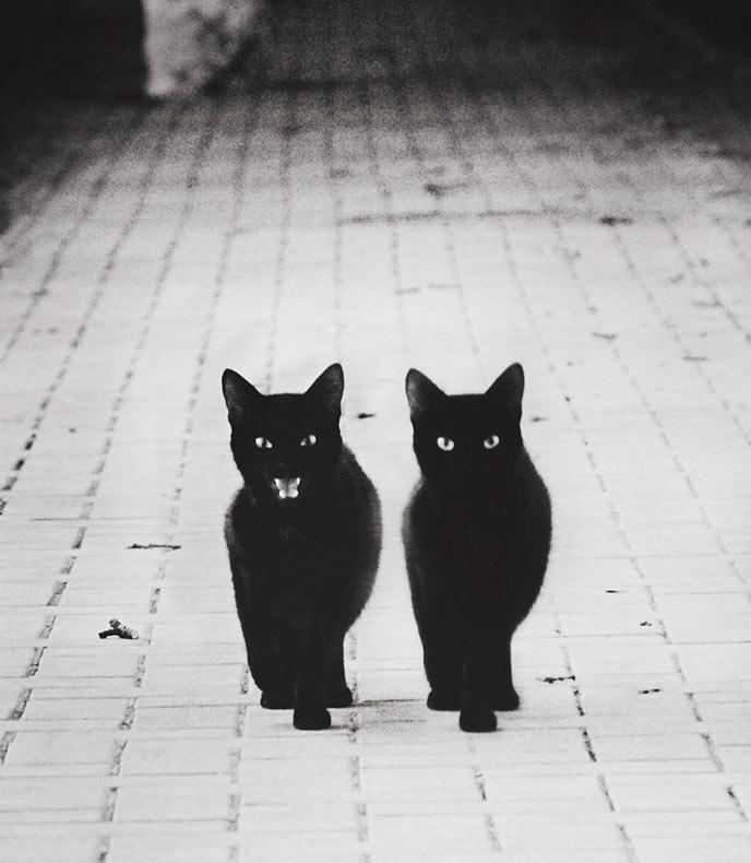 Caminando en las sombras de los gatos para descubrir sus misteriosas vidas