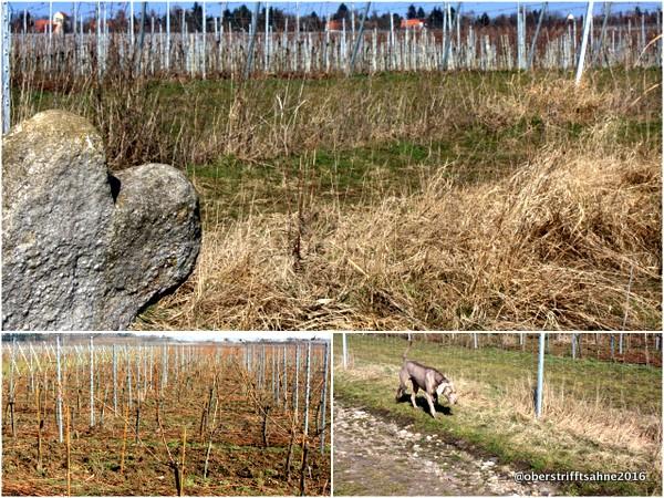 Werkstück Weimar Wein
