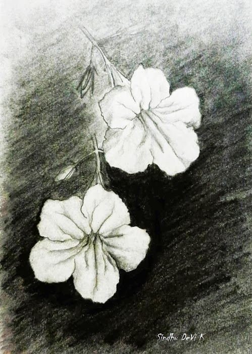 Wild flowers pencil drawing