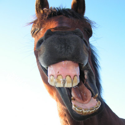 Funny Horse Pictures - The Animal Life
