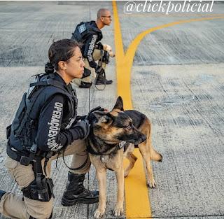 Policial civil do Gerb conclui curso de operações com cães na Bahia