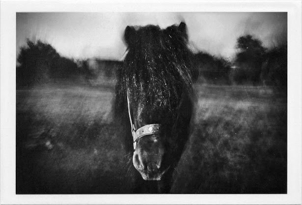 dirty photos - a - dark cretan landscape photo of horse head