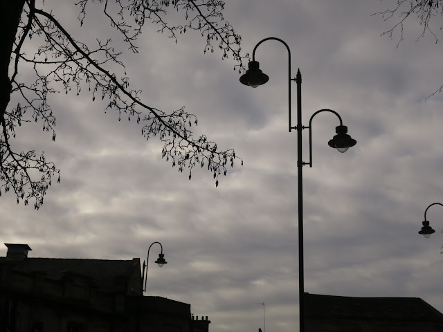 Silhouette of Alder catkins and lamposts against an evening sky.
