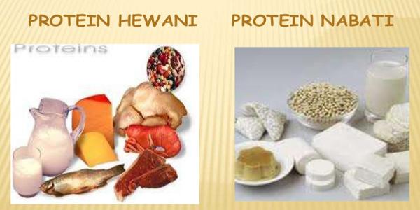 Daftar Makanan Mengandung Protein Tinggi