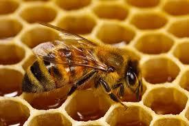 كيف يمكن الاستعانة بعسل النحل في النظام الغذائي