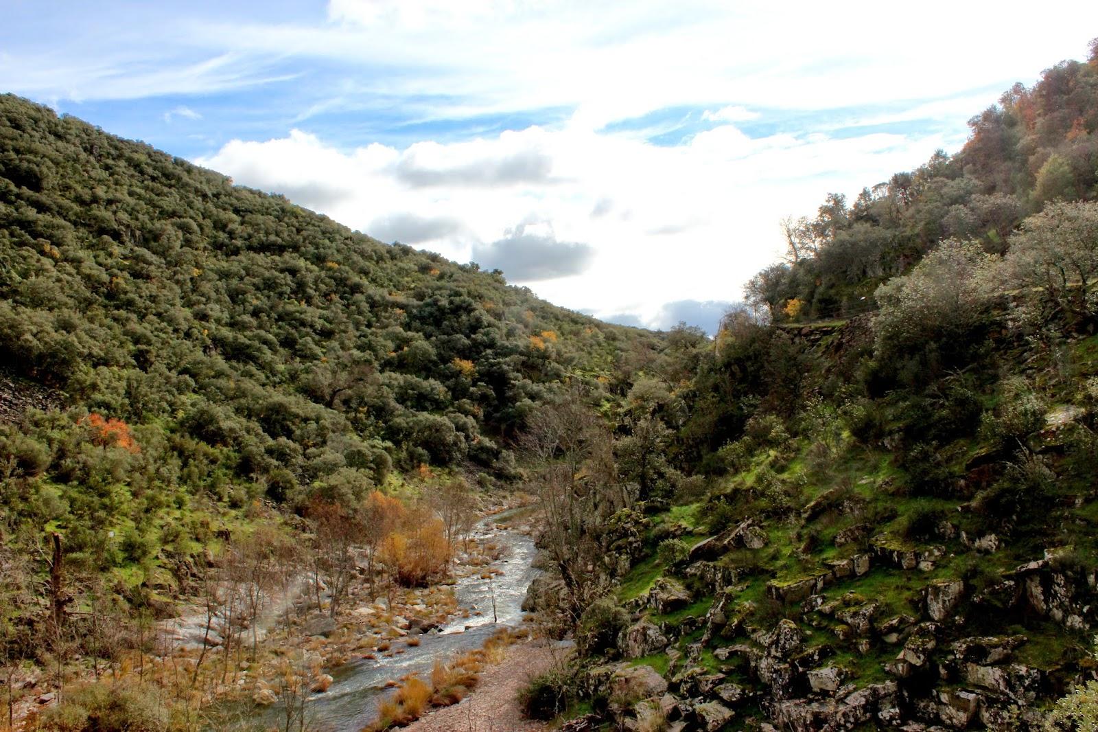 Bosque  de ribera en el río Estena