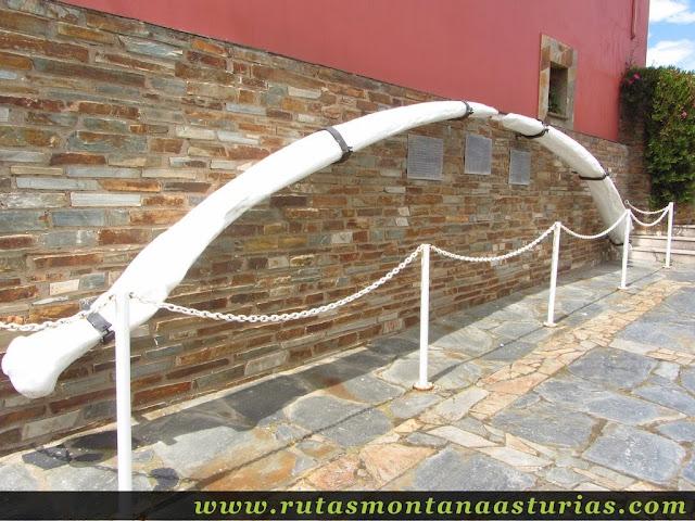 Costilla de ballena en el Mirador de la Riva de Puerto de Vega