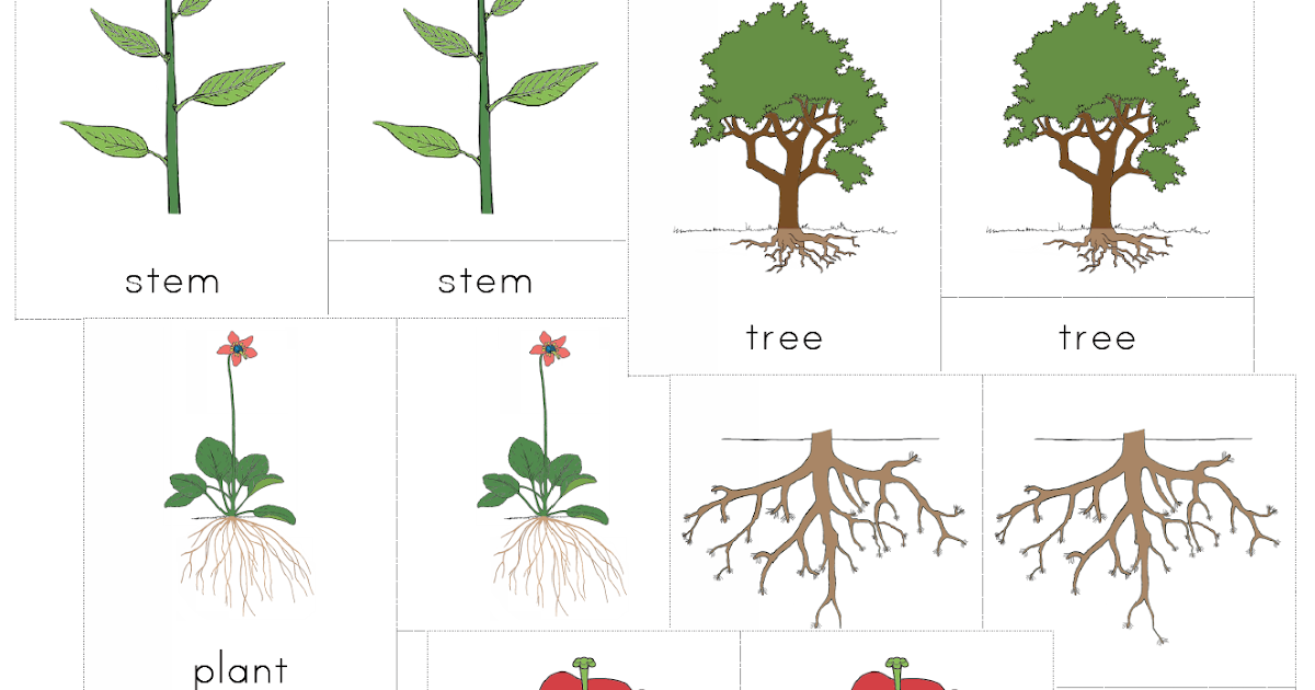 The Helpful Garden Montessori Botany Nomenclature Set For Primary 3 6 Years