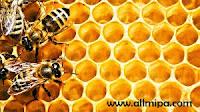 sarang lebah contoh konkret segi enam