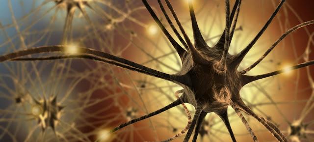 Neuronas y celulas