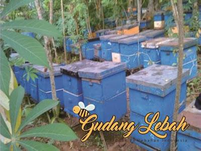 beli madu, jual madu, tempat jual madu, toko madu, madu bukalapak, madu tokopedia, tokopedia, bukalapak, juragan madu semrang, juragan madu online, madu semarang, madu denpasar, madu jakarta, madu yogya, madi solo, madu bandung, madu bekasi, madu tangerang, madu balikpapan, madu pontianak, madu makassar, madu banten, madu kalimantan, madu sumatera