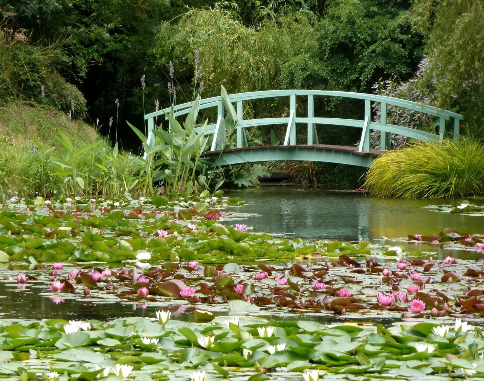 Garden Pond Water Lilies