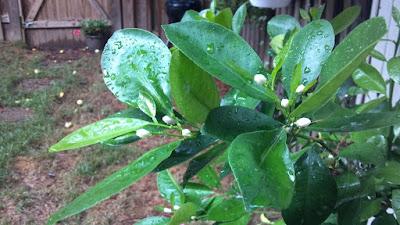 smart plants, plant science,