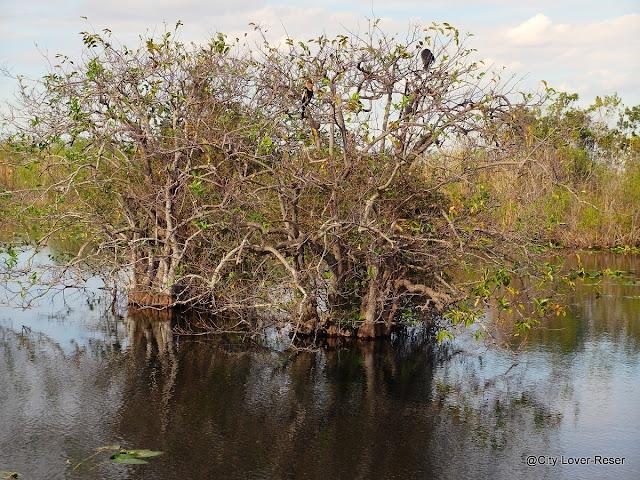 Florida -Everglades nationalpark