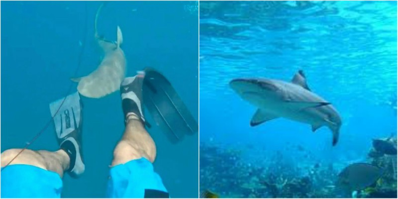 Φλόριντα: Δύτης κατέγραψε την επίθεση που δέχθηκε από καρχαρία (βίντεο)