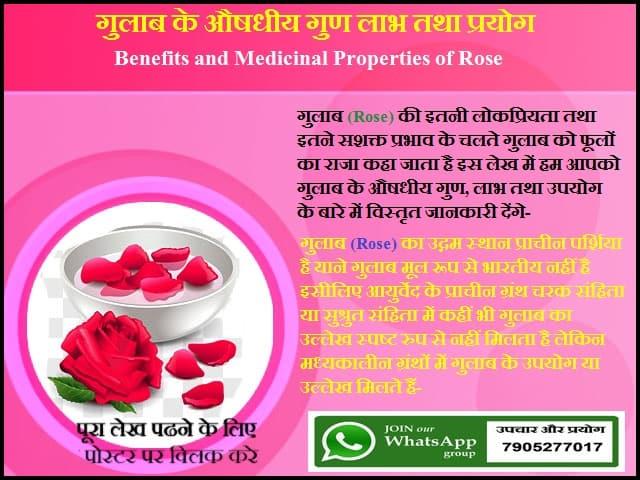 गुलाब के औषधीय गुण लाभ तथा प्रयोग