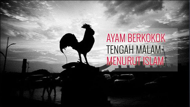 Ayam Berkokok Tengah Malam menurut Islam