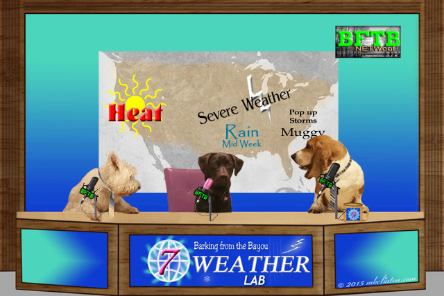 Weather Forecast for BFTB NETWoof News