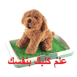 مشكلة الكلب بيعمل حمام في البيت