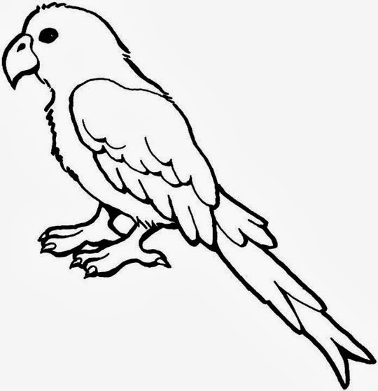Parrot Drawing :: Parrot Coloring Pages :: Worksheet Guide