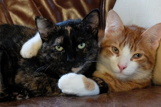 Kucing Betina dan Jantan