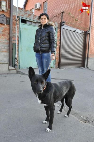 Chú chó đi bộ một mình hơn 300km để tìm về nhà chủ cũ