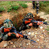 Do you know how many security personnel killed in Naxal-hit states in 20 yrs ?