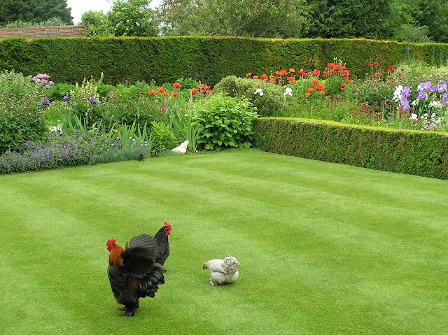 angielski trawnik, angielski ogród