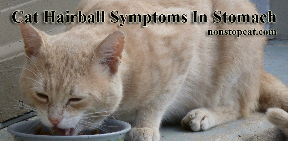 Cat Hairball Symptoms In Stomach