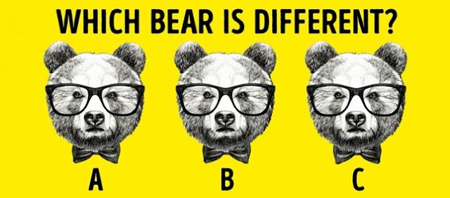 Tebakan gambar Beruang yang mana sih yang berbeda sendiri?