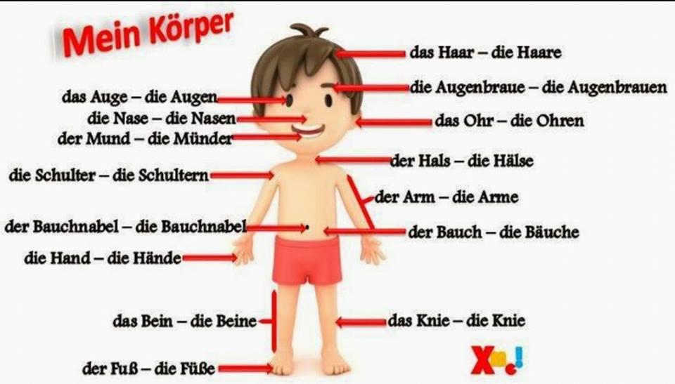 Nett Körperteile Bilder Ideen - Menschliche Anatomie Bilder ...