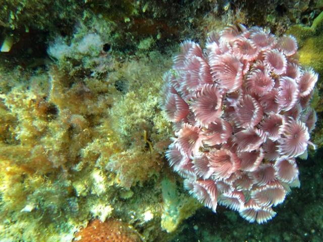 Uno de los mejores y más coloridos arrecifes que he visto en mi vida