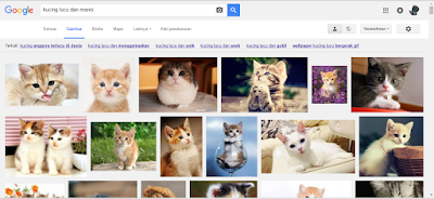 Fakta menarik jika semua kucing menghilang dari muka bumi