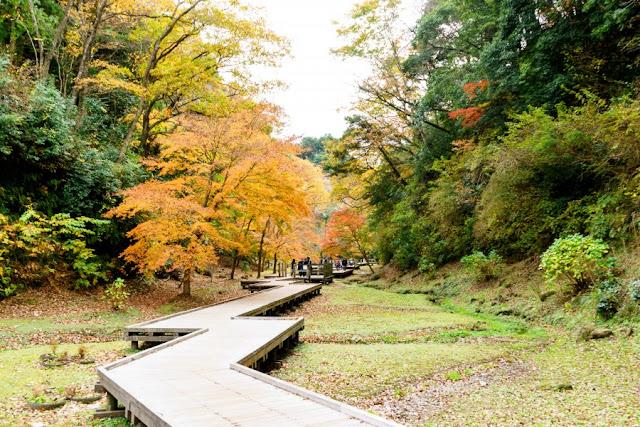 清水渓流公園(千葉)の木道