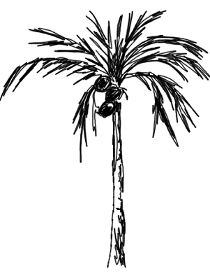 Graphic draw