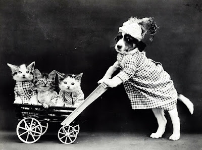 non-germane picture of dog pushing cat in pram
