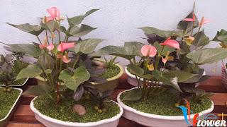 Hoa hong mon