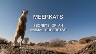 Meerkats: Secrets of an Animal Superstar