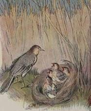 Dongeng Burung Lark yang Bersarang di Ladang Gandum (Aesop) | DONGENG ANAK DUNIA