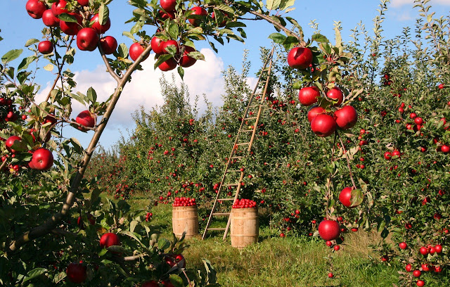 huerto manzanas